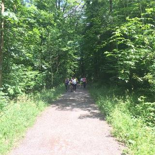 durch den Wald spazieren