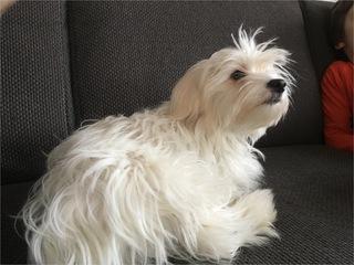 Lilly, Hund